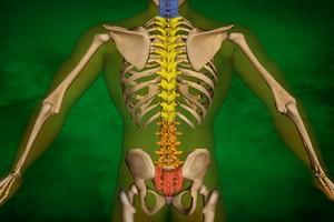 Schorzenia kręgosłupa: lepiej zapobiegać niż leczyć [© Milos Vymazal - Fotolia.com]