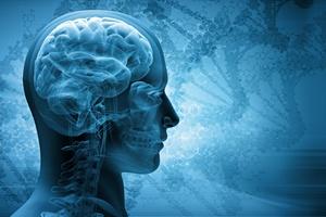 Sekret zdrowej (poznawczo) starości tkwi w wolnym starzeniu się mózgu [© adimas - Fotolia.com]