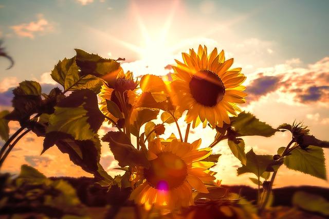 Seniorzy potrzebują słońca, często brakuje mi witaminy D [fot. Jörg Buntrock from Pixabay]