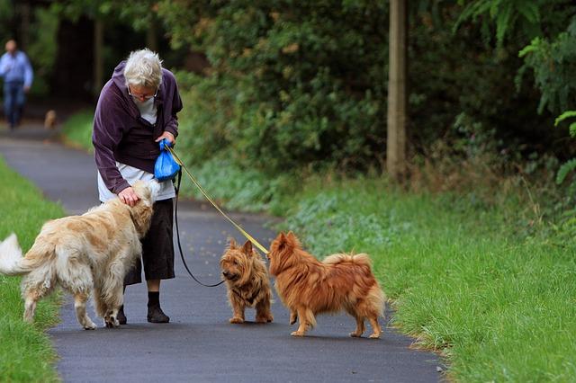 Seniorzy powinni mieć psy. Oto korzyści z posiadania czworonoga [fot. No-longer-here from Pixabay]