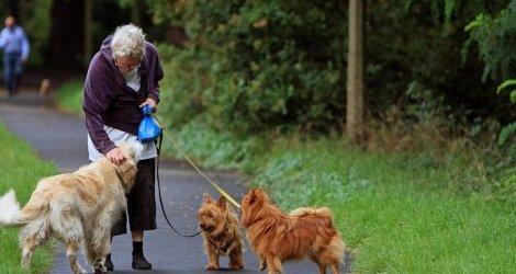 Seniorzy powinni mieć psy. Oto korzyści