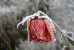 Sezonowe zaburzenia afektywne (SAD) - dolegliwość poważniejsza niż spadek nastroju [© Bramwork - Fotolia.com]
