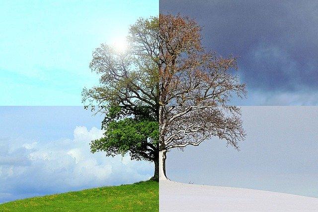 Sezonowe zmiany dostępu do światła dziennego wpływają na mózg [fot. gastoninaui from Pixabay]