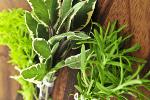 Sięgnij po zioła, by poprawić stan zdrowia [© Elenathewise - Fotolia.com]