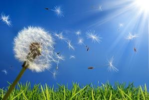Skąd biorą się alergie? [© Romolo Tavani - Fotolia.com]