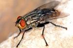Skuteczna walka z letnimi owadami [© rmayorga - Fotolia.com]