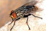 Skuteczna walka z letnimi owadami
