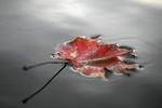Sposoby na jesienną apatię [© MAK - Fotolia.com]