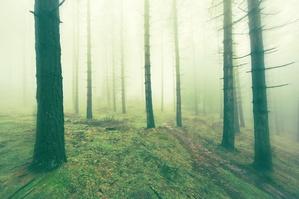 Starsi ludzie zgubili się w lesie. Pomogła komórka i policja [© mimadeo - Fotolia.com]