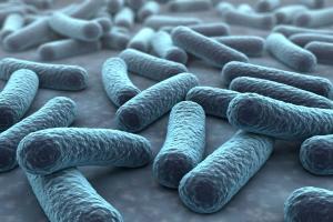 Superbakterie: oporne na antybiotyki, niebezpieczne. Sami je hodujemy [Fot. norman blue - Fotolia.com]