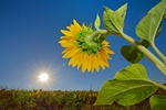 Światło słoneczne obniża ryzyko zapalenia stawów [© mady70 - Fotolia.com]