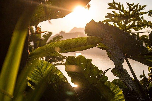 Światło słoneczne zmniejsza ryzyko śmierci z powodu COVID-19? [fot.  Marcel S. from Pixabay]