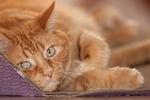 Światowy Dzień Kota - kocie gwiazdy [© mario beauregard - Fotolia.com]