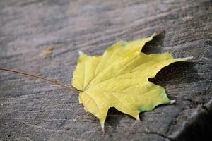 Trzy proste sposoby na jesienno-zimowe smutki [© S - Fotolia.com]