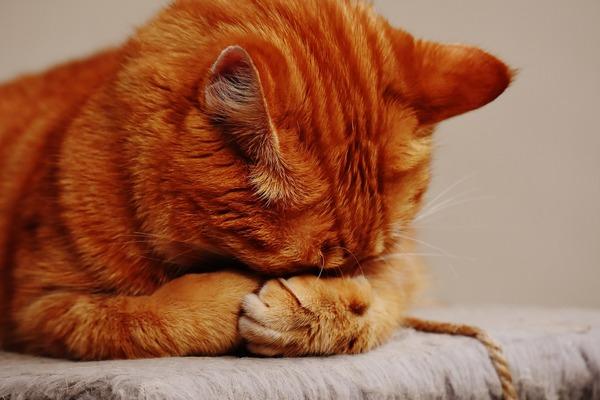 Twój kot upodabnia się do ciebie. Są na to naukowe dowody [fot. Alexas_Fotos z Pixabay]