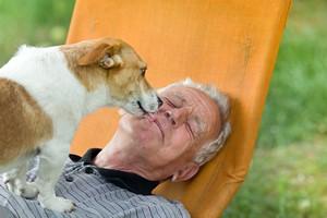 Twój pies doskonale cię rozumie. Przetwarza ludzką mowę podobnie jak ty [© Budimir Jevtic - Fotolia.com]