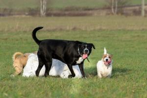 Tymi chorobami możesz się zarazić od swojego psa [Fot. Rajtar photography - Fotolia.com]