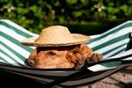 Urlop czy zwierzę? Internauci o podróżach z pupilami [© Ivonne Wierink - Fotolia.com]