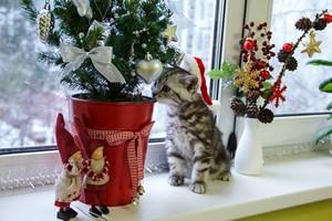 Uwaga! 4 bożonarodzeniowe rośliny szkodliwe dla psów i kotów [Choinka, © crazykuzya - Fotolia.com]