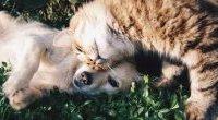 Właściciele psów i kotów mogą być bardziej odporni na COVID-19