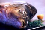 W wigilię rekin zdrowszy od karpia [© ewa kubicka - Fotolia.com]