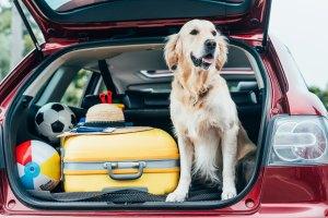 Wakacje z psem: cztery rzeczy, o których musisz pamiętać [Fot.LIGHTFIELD STUDIOS - Fotolia.com]
