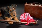 Wakacje ze zwierzętami [© Anyka - Fotolia.com]
