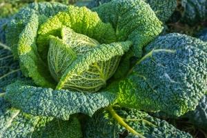 Warzywa kapustne chronią przed zawałami i udarami [Fot. Tobias - Fotolia.com]