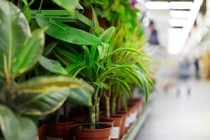 Wi�cej tych kwiat�w w mieszkaniu - mniejsze zanieczyszczenie powietrza [© hacohob - Fotolia.com]