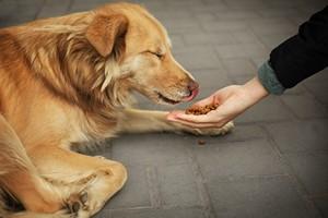 Więcej współczucia mamy dla zwierząt niż ludzi bezdomnych [© Africa Studio - Fotolia.com]