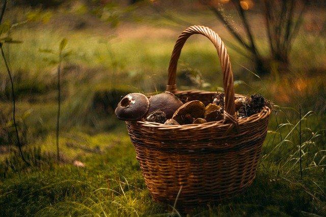 Większe spożycie grzybów to niższe ryzyko zachorowania na raka  [fot.  Šárka Jonášová from Pixabay]