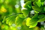 Wiosenna dieta i gimnastyka mózgu [© Zlatko Ivancok - Fotolia.com]
