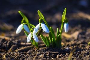 Wiosna 2020 - w tym roku bez radosnych powitań [© andrey7777777 - Fotolia.com]