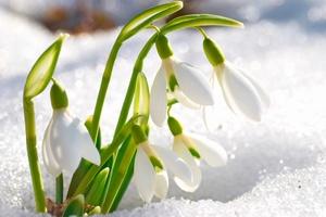 Wiosna! Ale gdzie? [© Pavlo Vakhrushev - Fotolia.com]