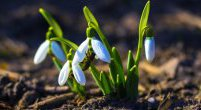 Wiosna! Nareszcie wiosna!