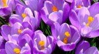 Wiosna, już wiosna!