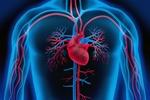 Wirtualne serce pozwala pogłębić wiedzę o powszechnej chorobie [© psdesign1 - Fotolia.com]