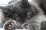 Właściciele kotów mają zdrowsze serca [© Max Tactic - Fotolia.com]