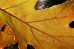 Wrażliwi na jesień: wrzody żołądka i dwunastnicy [© mario beauregard - Fotolia.com]