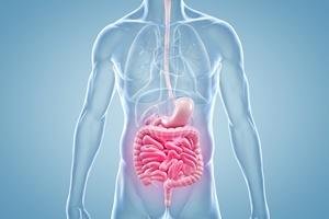 Wrzody żołądka lub dwunastnicy: zbadaj się, to nie boli [© ag visuell - Fotolia.com]