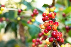 Wyciąg z ziaren kawy pomaga kontrolować poziom cukru [© prajit48 - Fotolia.com]
