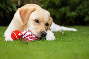 Zabawy z psem [© newman001 - Fotolia.com]