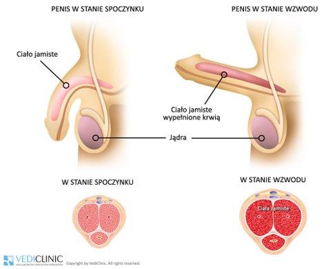 erekcja wzmacniająca gruczołu krokowa dlaczego seks działający słabe erekcję