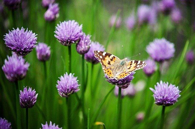 Zadbaj o ogród - to poprawi samopoczucie podobnie jak spacer czy jazda na rowerze [fot. Martin Melicherik from Pixabay]