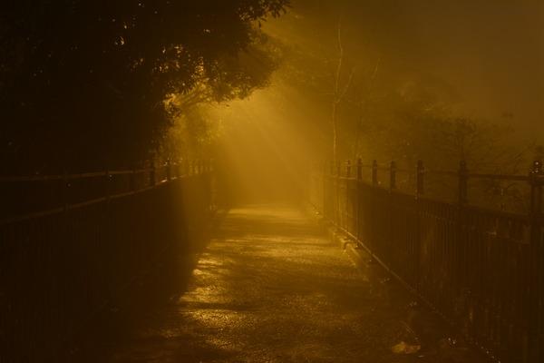 Zanieczyszczenie powietrza niszczy pamięć? [fot. Andy Leung z Pixabay]