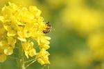Zdrowe serce: olej rzepakowy może pomóc [© Contrail - Fotolia.com]