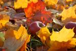 Zdrowy jesienny life style [© Usbek - Fotolia.com]