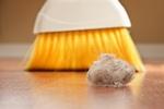 Zima - raj dla roztoczy. Jak radzić sobie z alergią? [© soupstock - Fotolia.com]