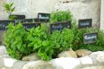 Zioła - lecznicza moc z własnego ogrodu [© glittergirl - Fotolia.com]