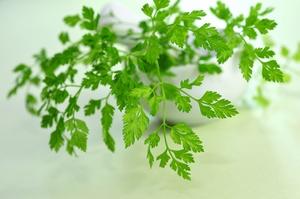 Zioła w służbie zdrowiu: trybula ogrodowa na nadciśnienie i lepsze trawienie [© Printemps - Fotolia.com]